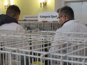 Wystawa Okręgowa - Włoszakowice 2019r.